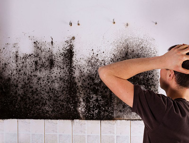 Get Rid of Black Mold With SNiPER